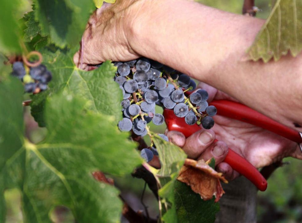Wine investment requires expert knowledge, and should not be entered into without advice