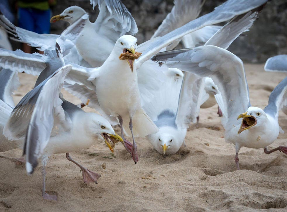 A pack of seagulls squabble over discarded food left on a beach