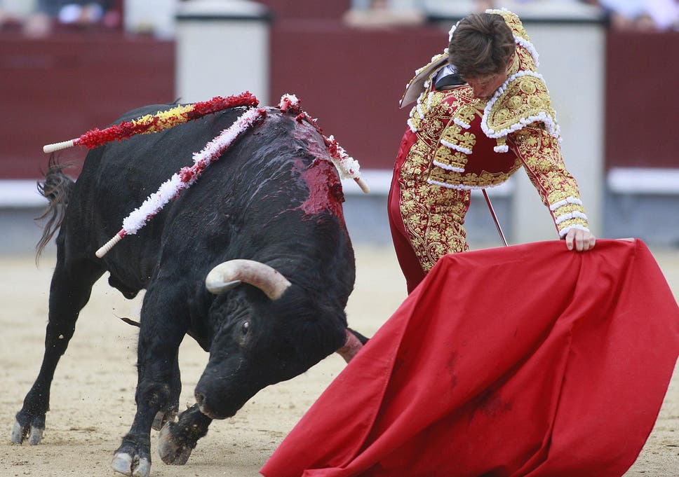 Bull Fighting Bull Fighting