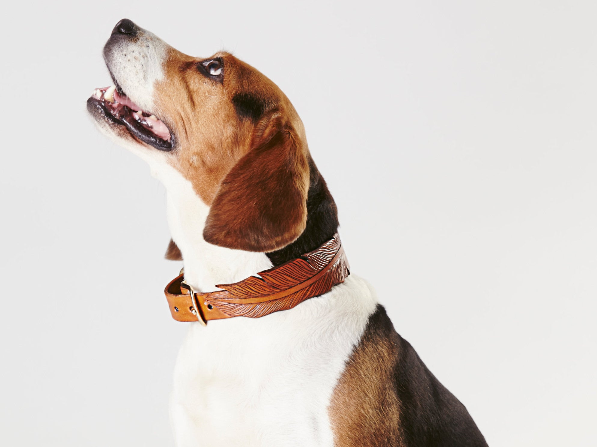 10 Best Dog Collars The Independent