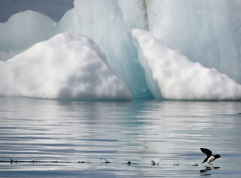 Global warming has caused a substantial reduction in the Arctic ice sheet