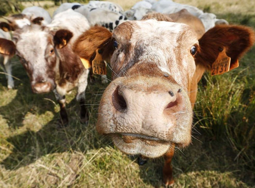 Most dairy farmers graze their cows for part of the year, but  there are currently no guidelines set by the industry specifying  the number of days and nights a cow should be kept outdoors.