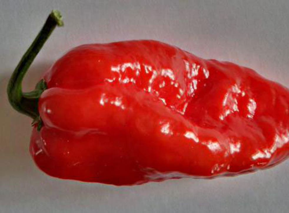 The Komodo Dragon chilli pepper is being sold at 500 Tesco stores across the UK