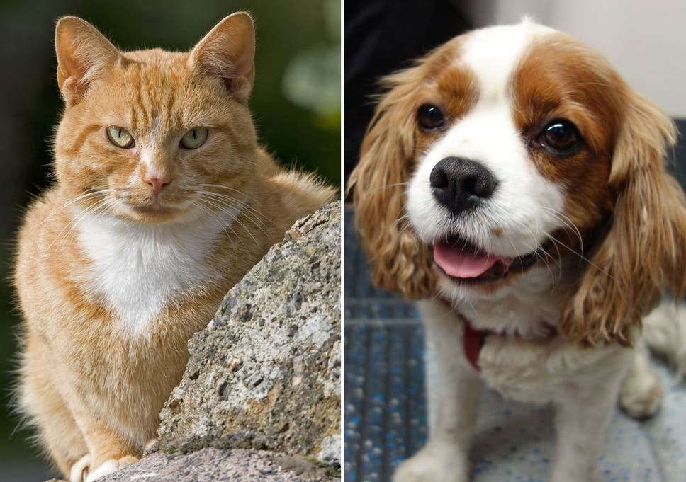 English Essay Com Its The Debate That Has Long Divided Animal Lovers Now Scientists Have  Confirmed That Cats High School Argumentative Essay Topics also Science And Religion Essay Cats Vs Dogs Scientists Confirm That Felines Are Better From An  Research Essay Topics For High School Students