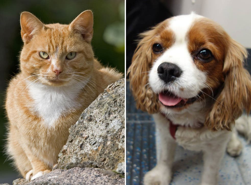 It's the debate that has long divided animal lovers. Now scientists have confirmed that cats really are better than dogs – at least from an evolutionary perspective