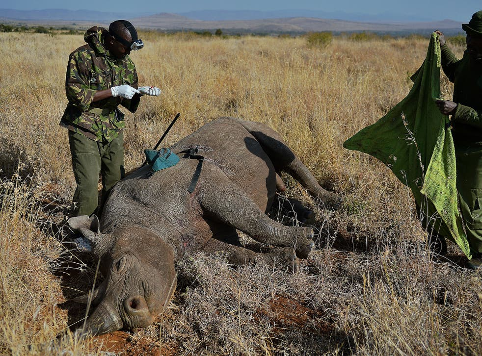 'Rhinos are worth 100 times more dead than they are alive'