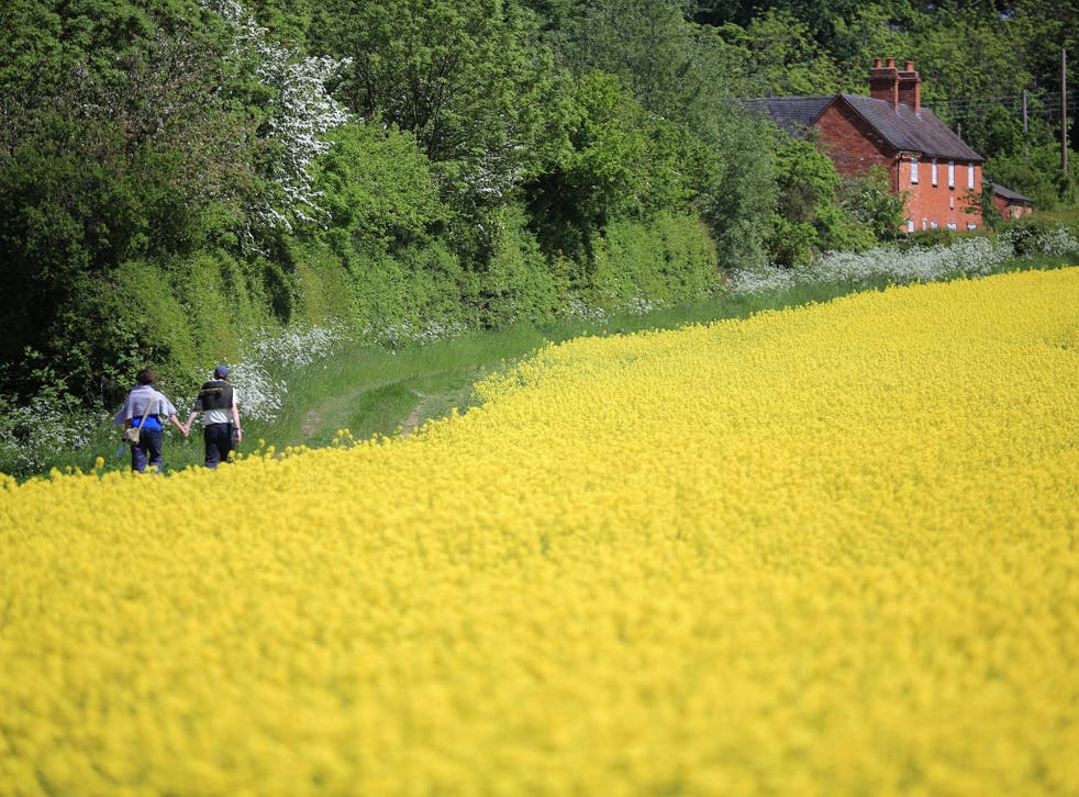 Rapeseed blooms in the sunshine, in a field close to the village of Brewood in Stafford