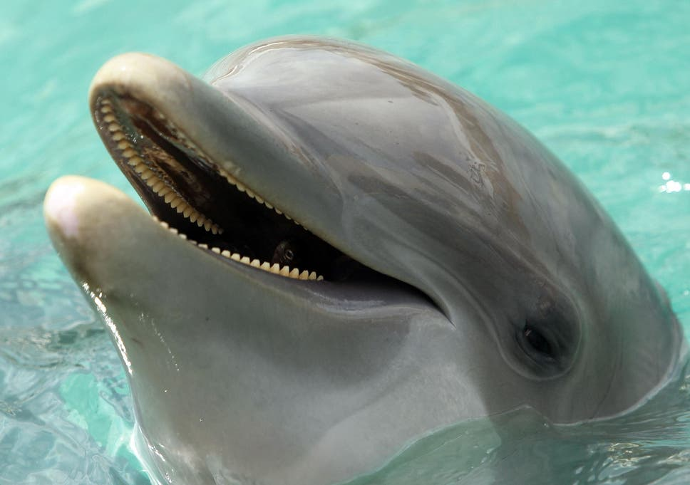 scientists discover dolphins can speak almost like humans the