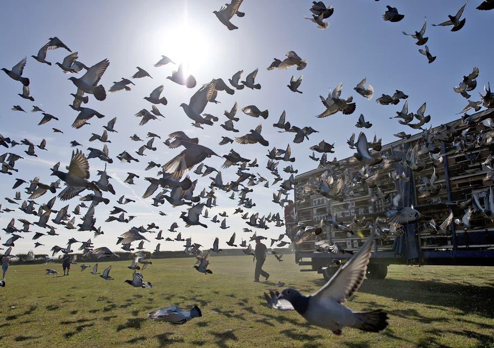Thousands of racing pigeons are released in Worksop, Nottinghamshire, last week