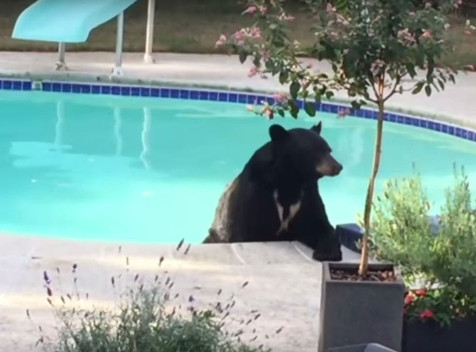 The bear was spotted having a relaxing dip in the pool of a Vancouver home