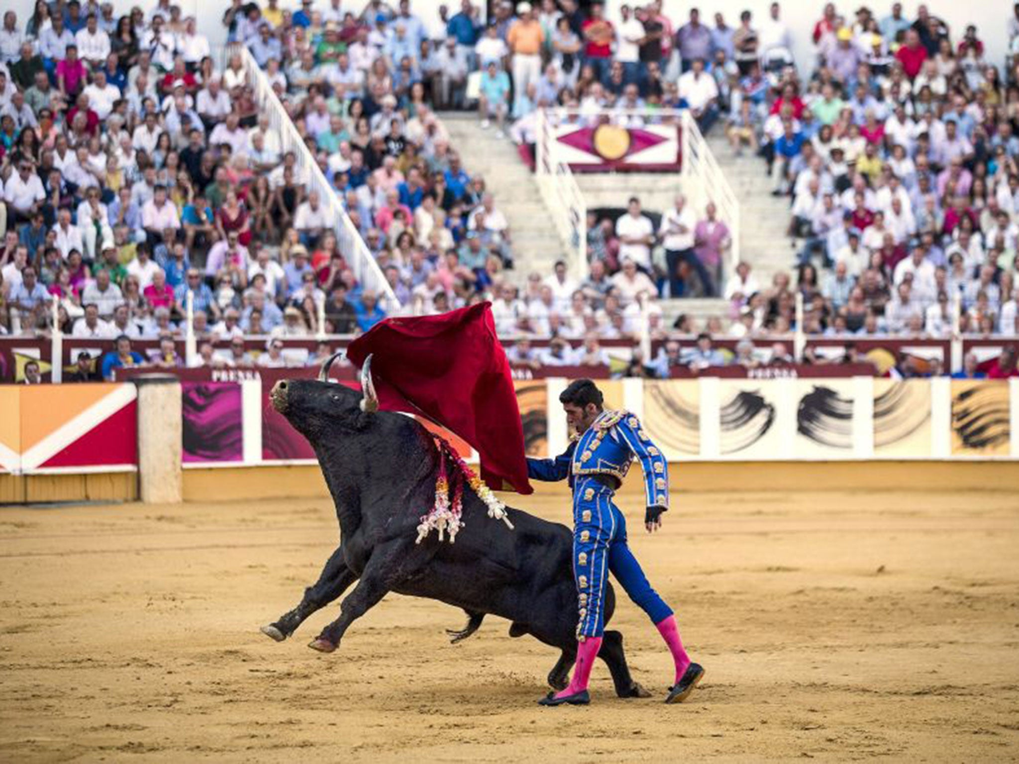 Thousands demand bullfighting ban in Spain protest march | The Independentindependent_brand_ident_LOGOUntitled