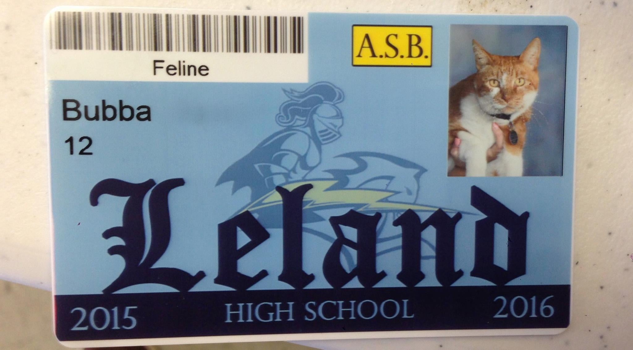 Bubba the cat finally recognised as a student of San Jose's Leland High School | The Independentindependent_brand_ident_LOGOUntitled