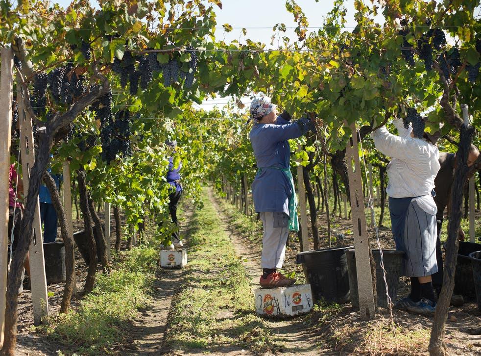 Apuglia Puglia Itria Valley Locorotondo Vineyards