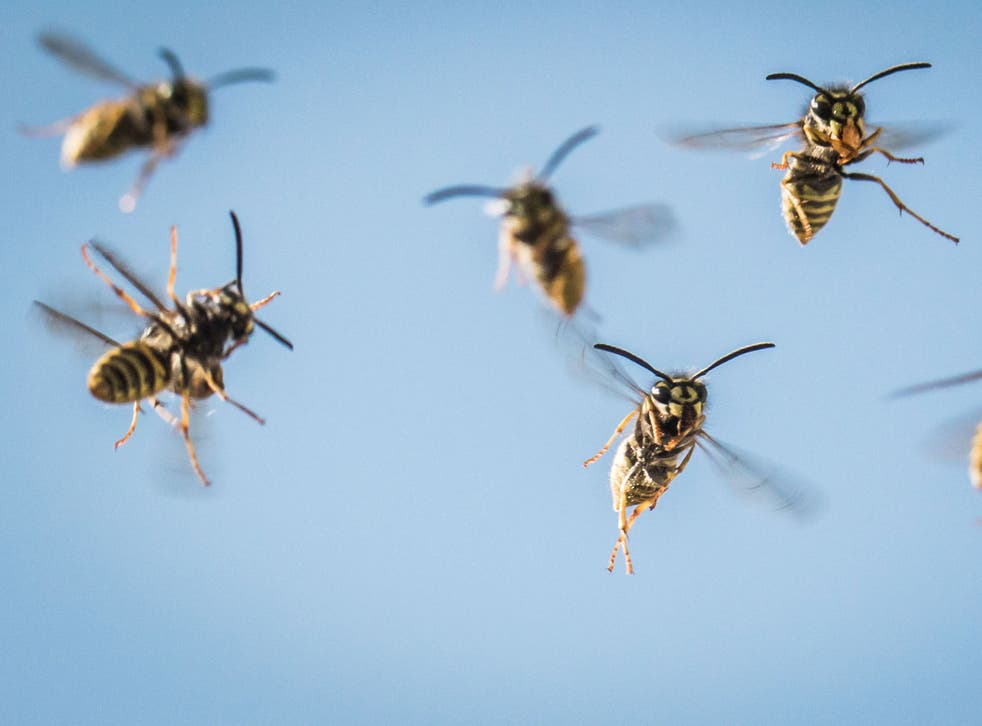 Unseasonable weather means there are far more wasps in the South East of the UK than usual