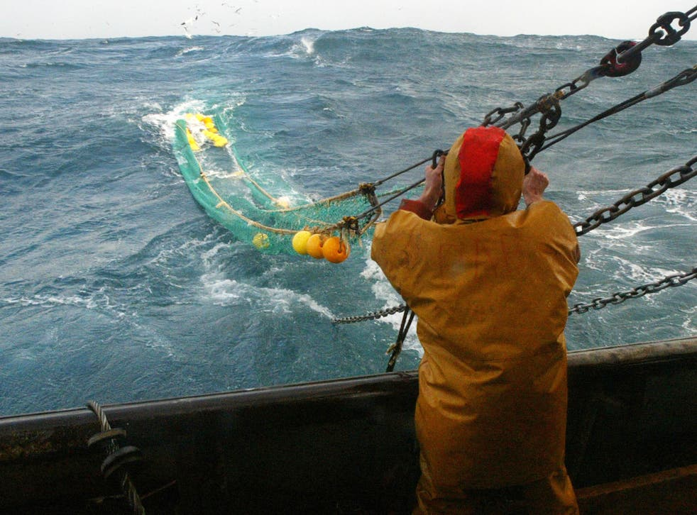 Pulse fishing's electric shocks force commercially valuable bottom-dwelling fish and seafood up from the seabed into the water column