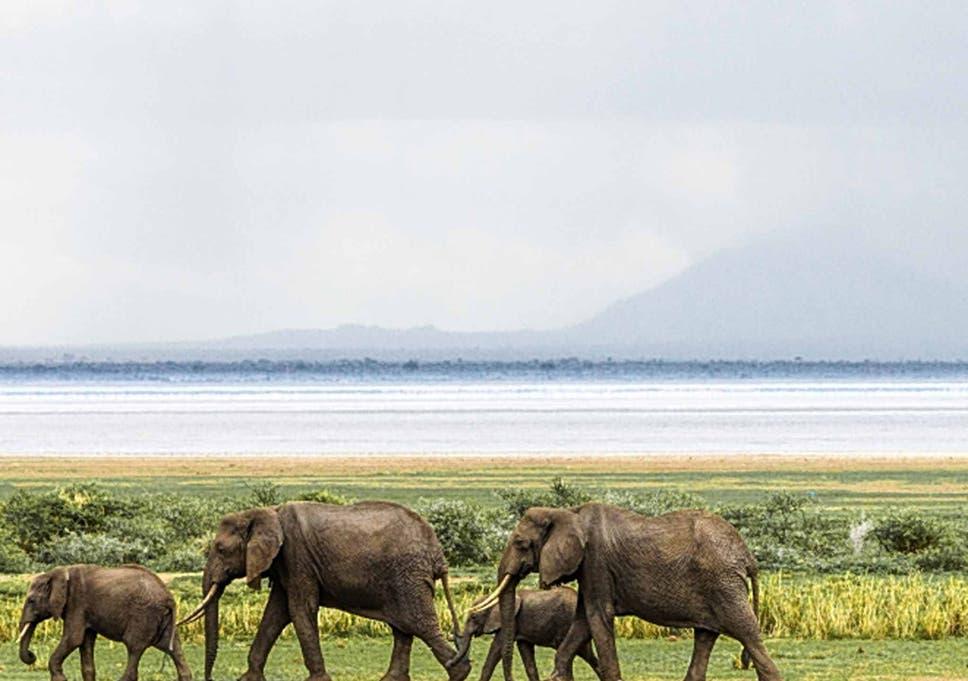 08329d6a8d7d6a Elephant slaughter continues