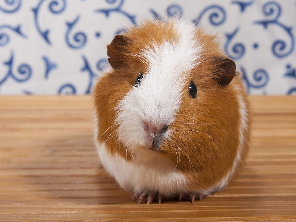 A pet is for life: so which is best for you? | The Independent