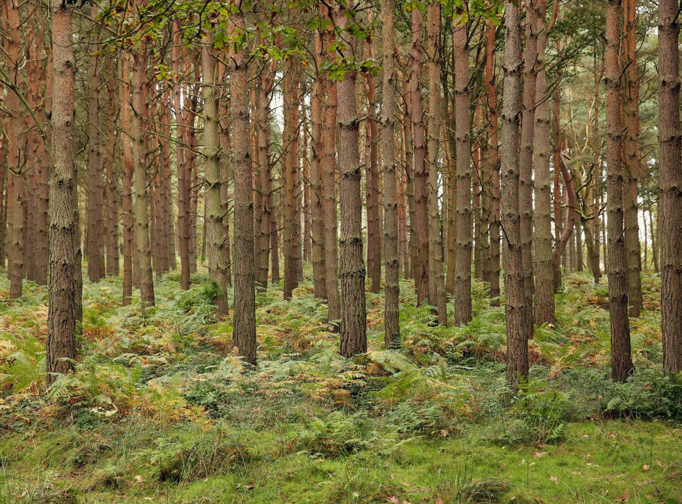 Some of the 3 billion trees in the UK, around 47 for everyone in the country