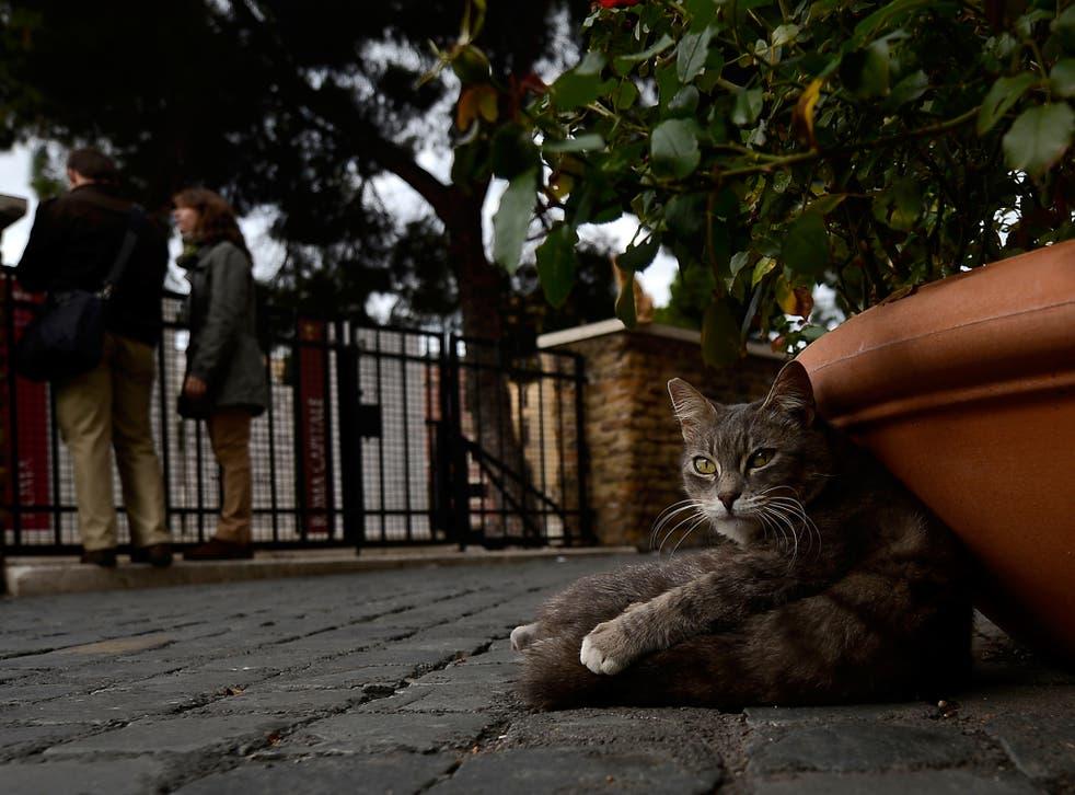 The District Department of the Environment described stray cats as 'non-native predators'