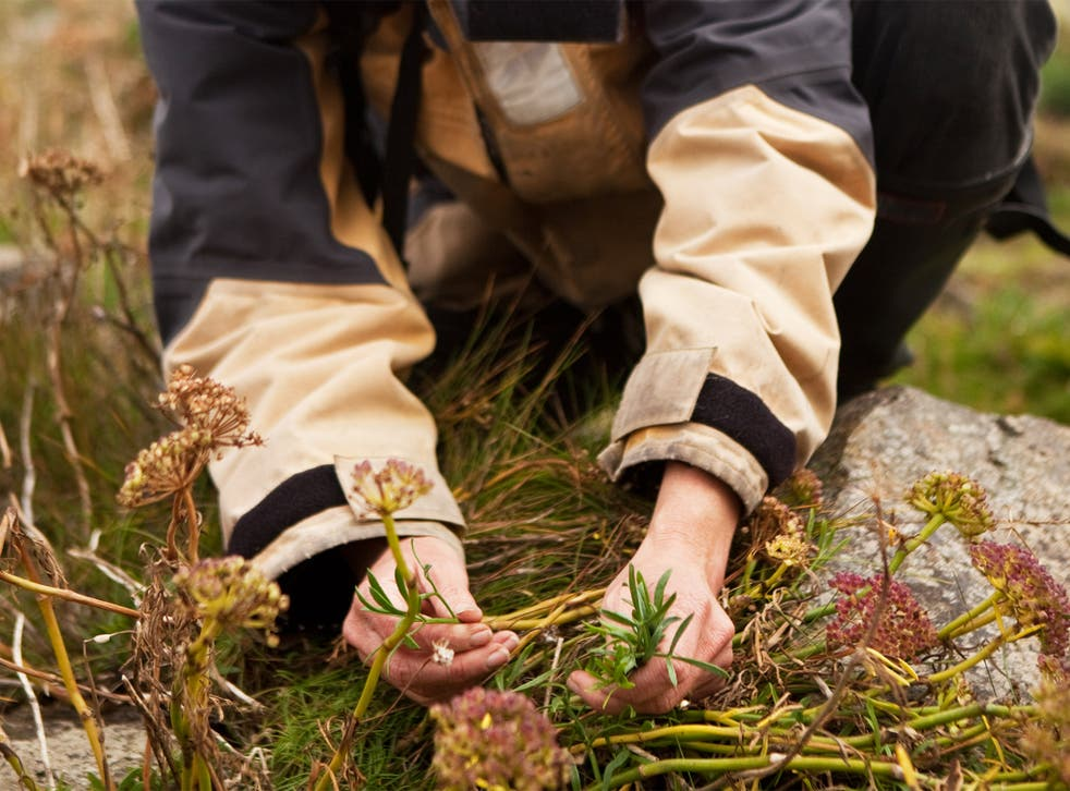 Foraging has been championed by a host of celebrity chefs