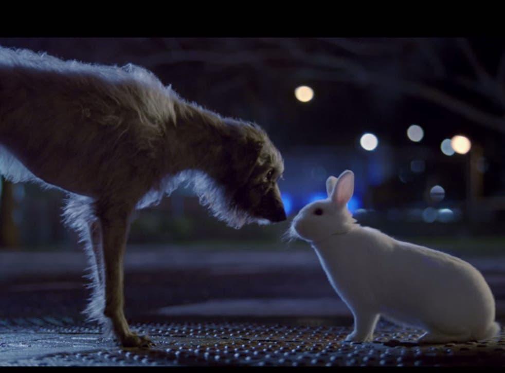 Baxter meets a rabbit in the Blue Cross advert