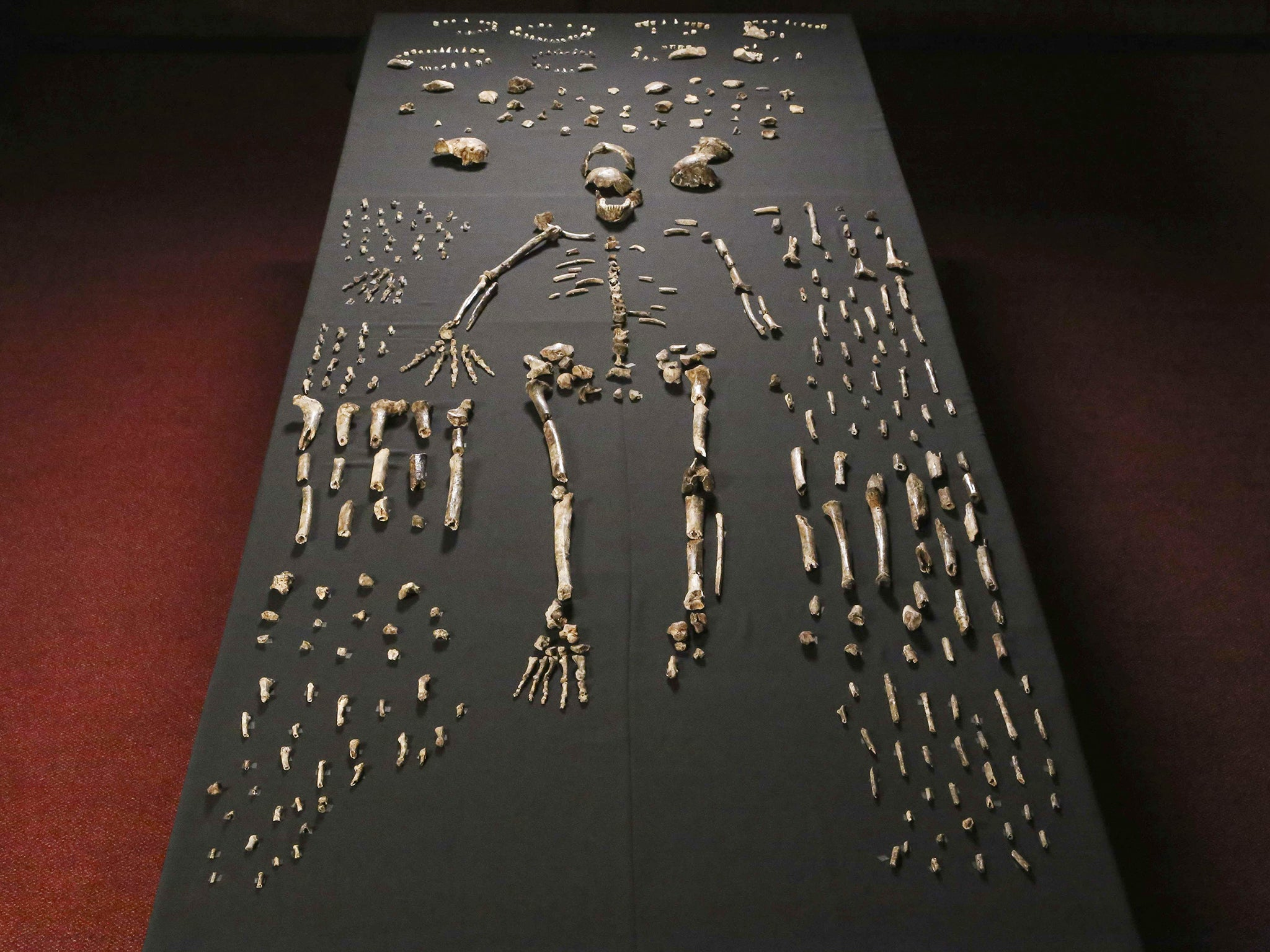 Homo Naledi New Species Of Human Discovered After Ancient Skeletons Unearthed In South Africa