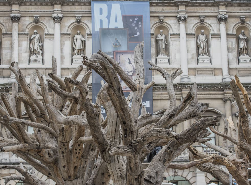 Ai Weiwei's tree sculptures taking shape in the courtyard of London's Royal Academy
