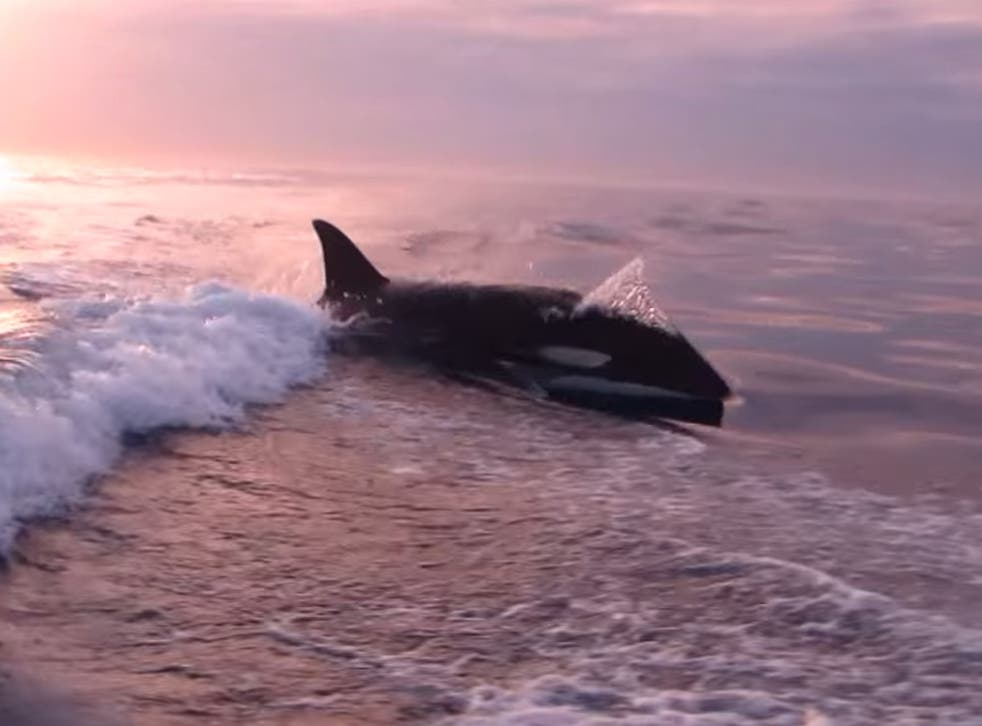The killer whales came dangerously close to two fishermen off the coast of California