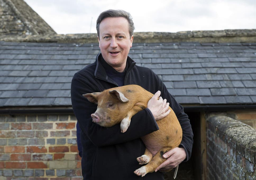 David Cameron holds Florence the piglet, one of the two which he donated to  Coggs