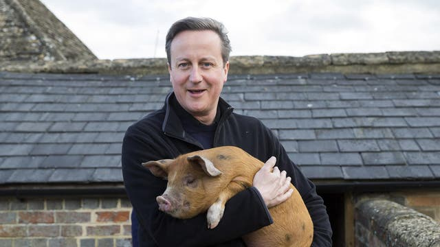 A book released by Conservative peer Lord Ashcroft alleged that an MP and Oxford contemporary of David Cameron had allegedly seen a photograph of Mr Cameron performing a sex act on a pig while at university.  Downing Street did not comment on the allegations and the peer said they could have been a case of mistaken identity
