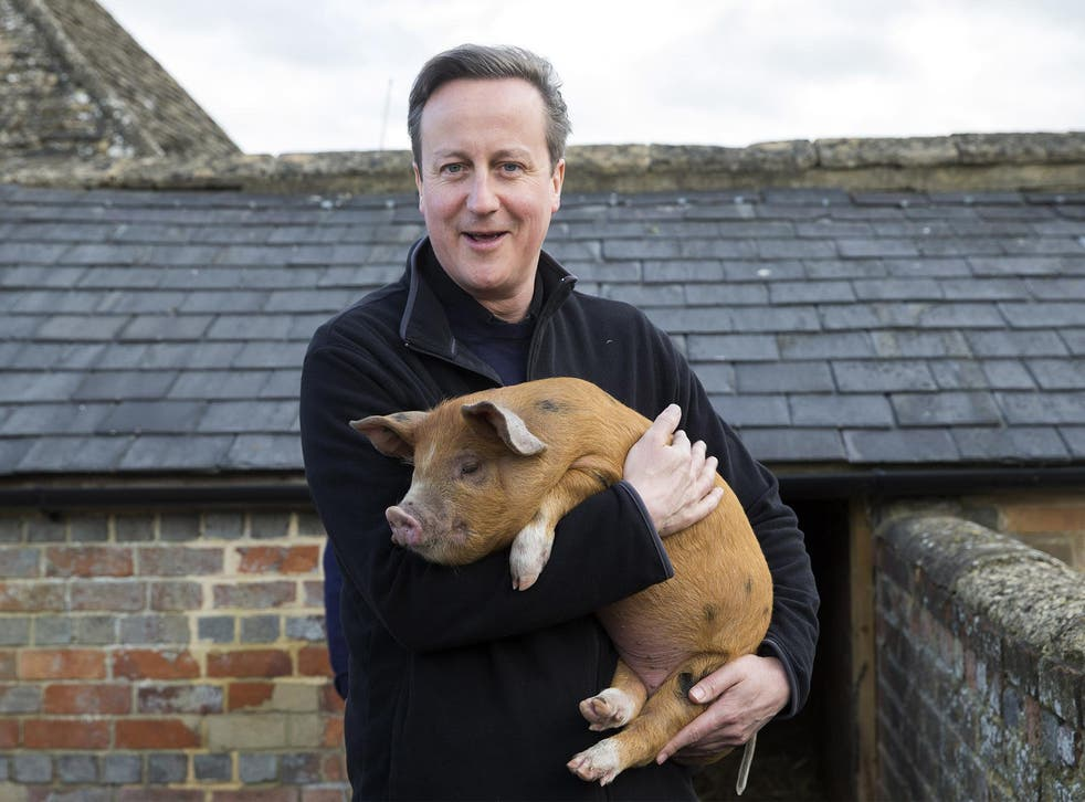 David Cameron holds Florence the piglet, one of the two which he donated to Coggs Farm in 2014