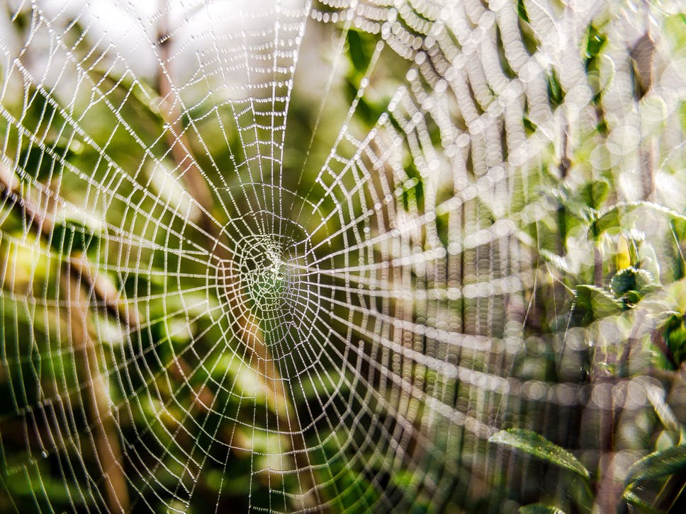 Spiders are not invading your house for the winter — they are hiding ...