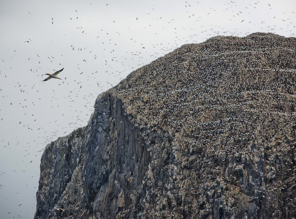 The uninhabited Bass Rock rises to over 100 metres