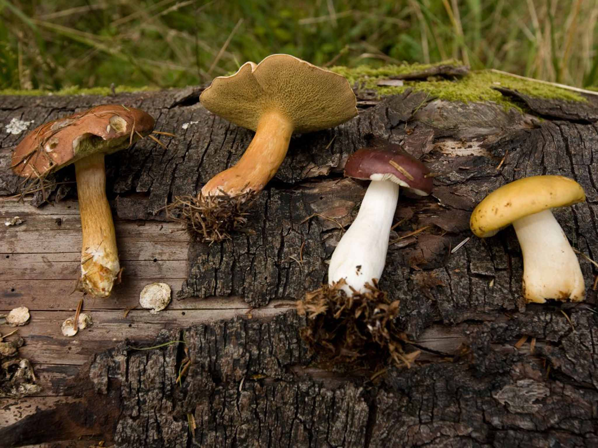 Foraging breaks: The experts who know their ceps from their death caps | The Independentindependent_brand_ident_LOGOUntitled