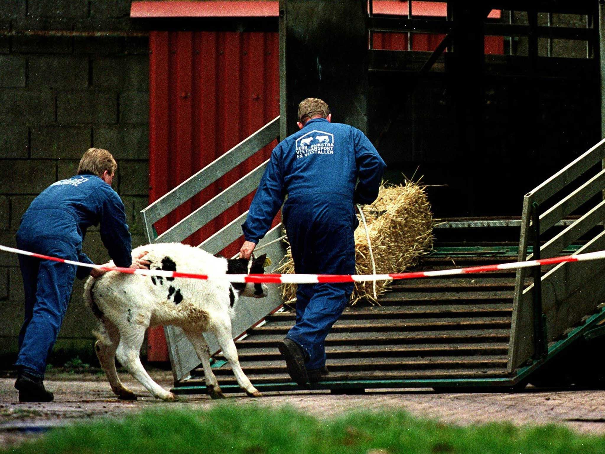 Mad cow disease in the UK: What is BSE and what are the symptoms?