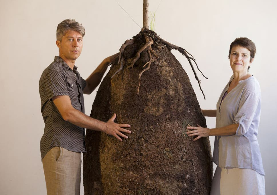 Green burials: Plans for new biodegradable human seed pods