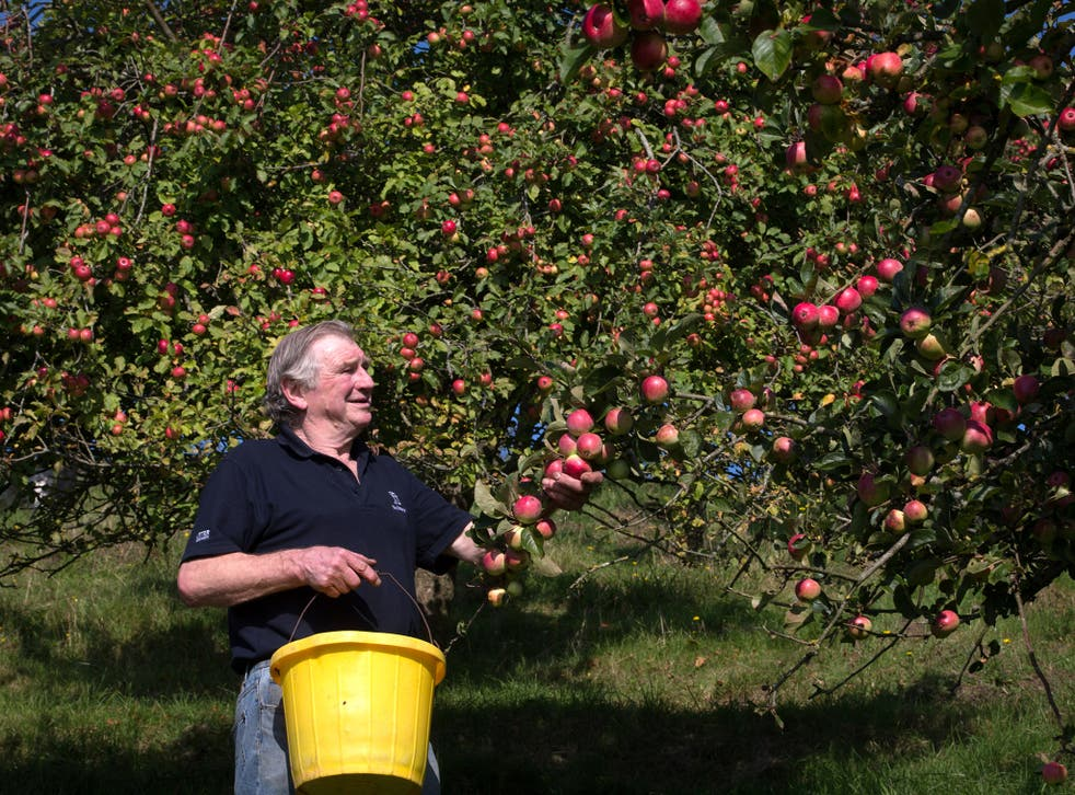 An apple orchard in Minnesota is under fire after ranting about 'the China Virus'