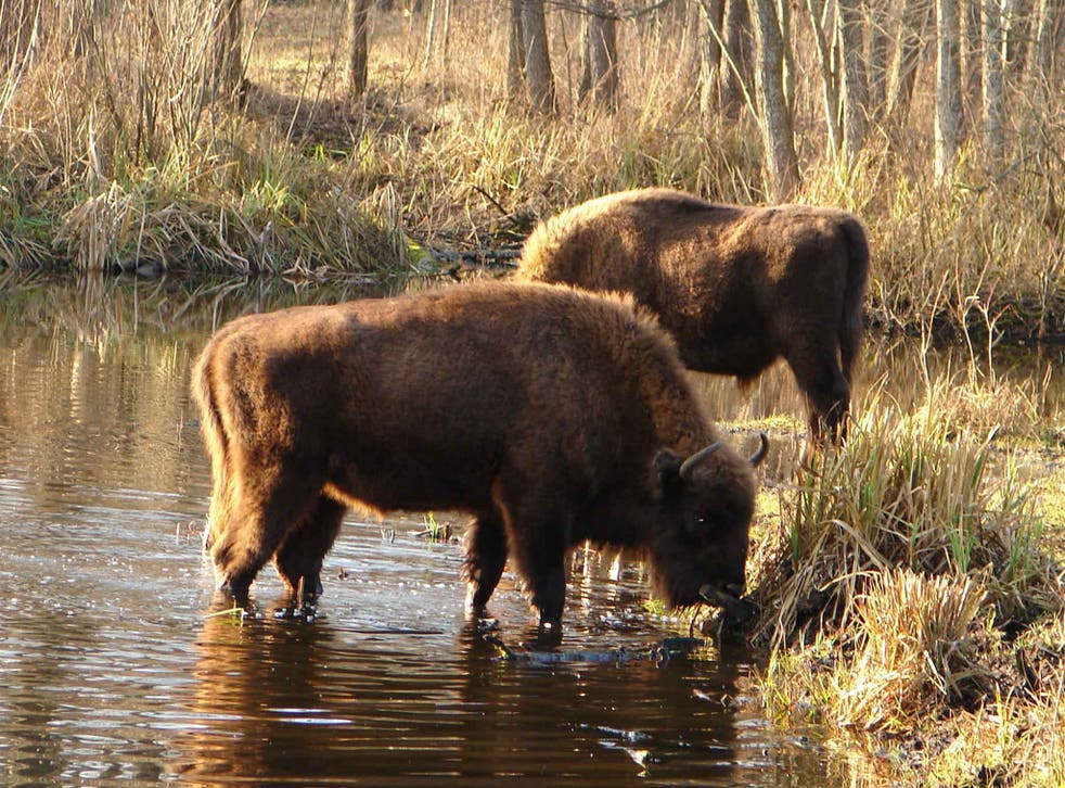 The absence of human activity in the exclusion zone has benefited the wildlife of the region