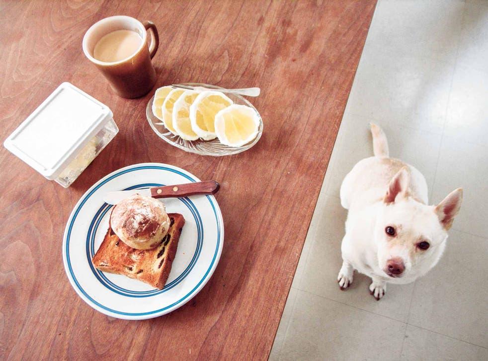 Natsuko Kuwahara: Bread and a Dog