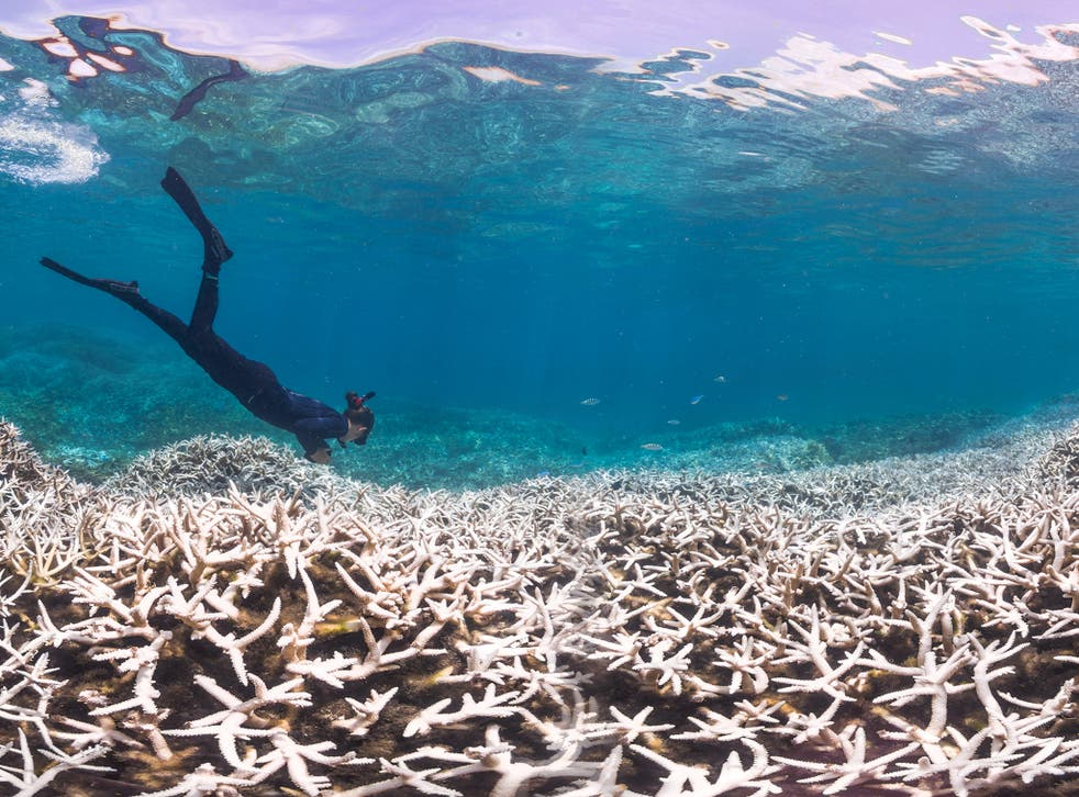 Alice Lawrence, a marine biologist, assesses the bleaching at Airport Reef in American Samoa