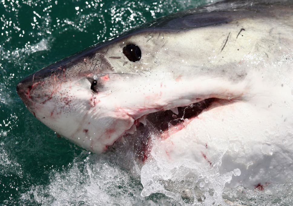 Surfer killed by shark