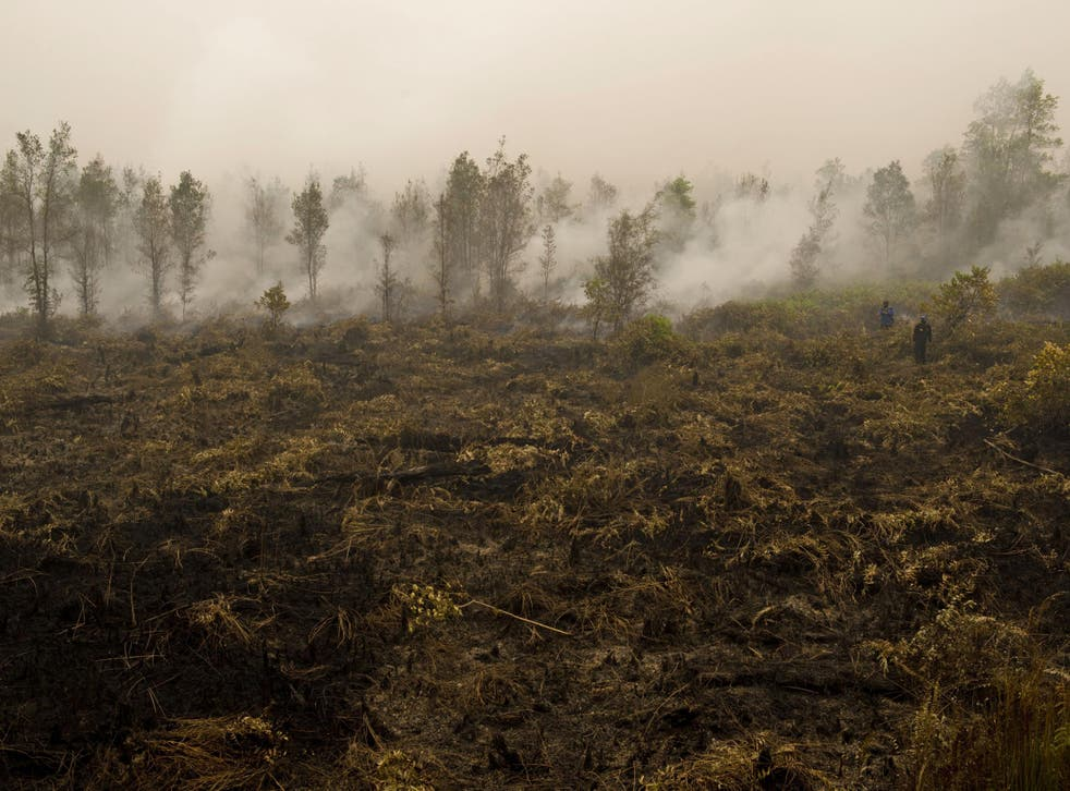 Greenpeace release drone footage showing huge damage caused by Indonesia's forest fires