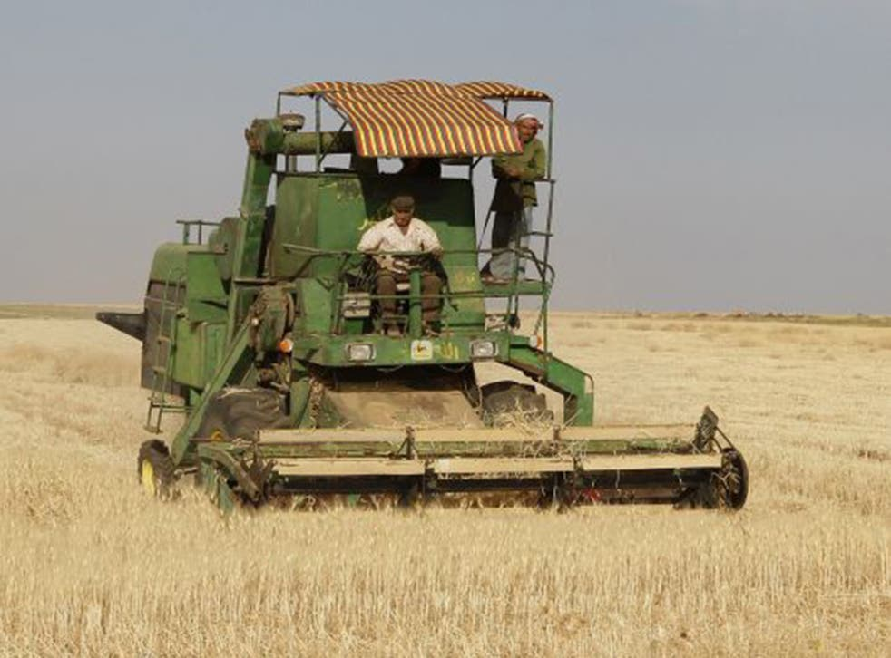Syria's future agriculture is under threat from the conflict