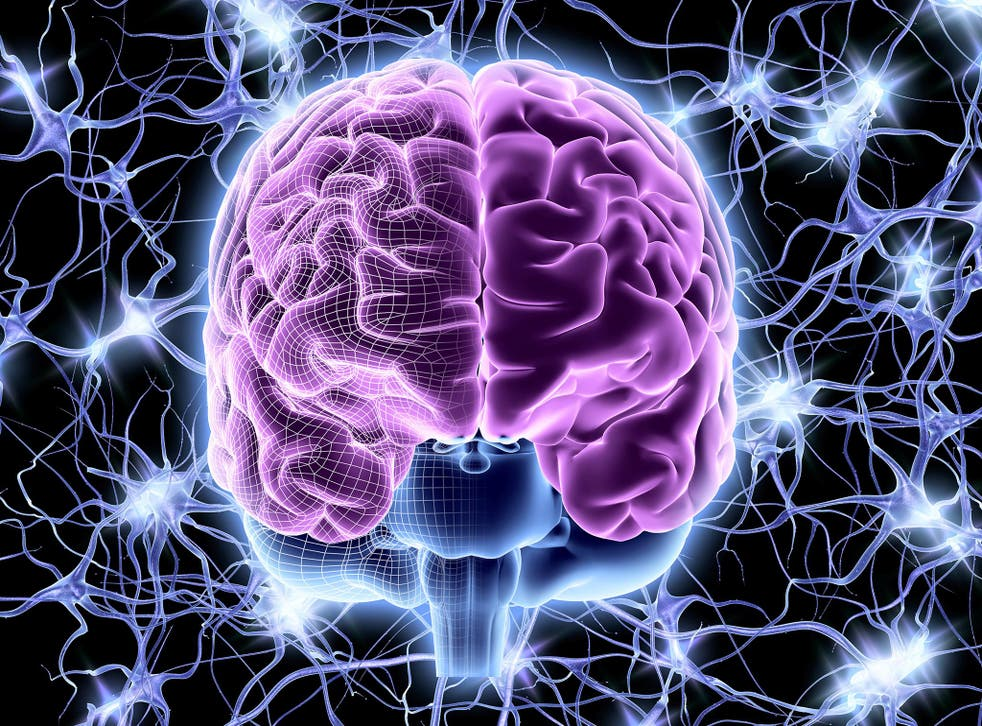 Each side of the prefrontal cortex is used differently depending on our age, scientists say