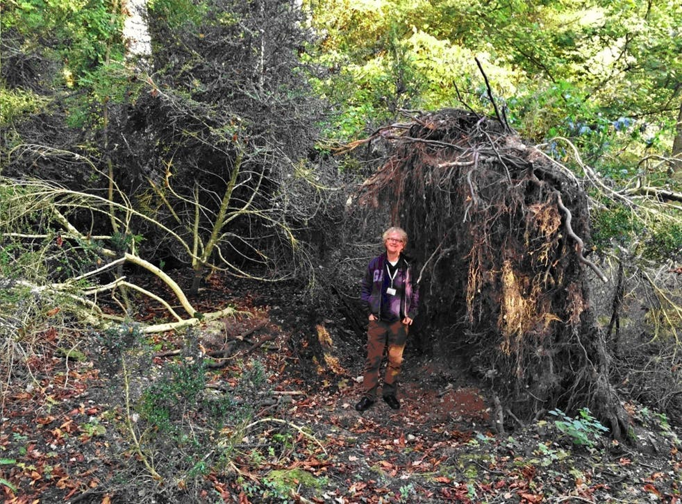 A fallen tree which forms the wall of a Stone Age 'eco-home' near Stonehenge
