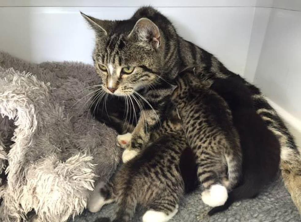 The mother cat and her kittens have now been fostered