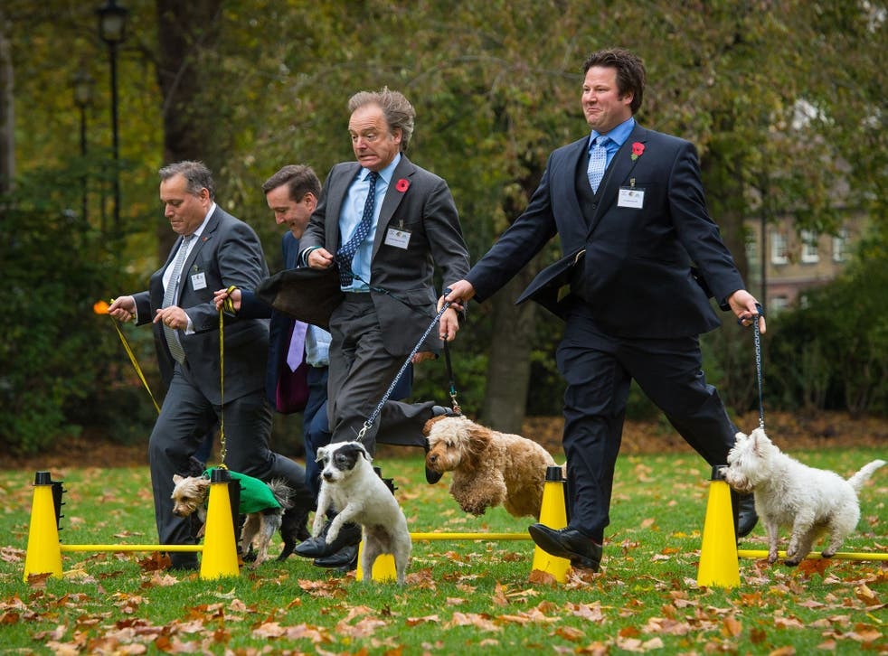 Best in show: David Warburton with his dog Bailey, Chris Matheson with Casper, Hugo Swire with Rocco, and Alec Shelbrooke with Maggie and Boris compete for the title of Westminster Dog of the Year