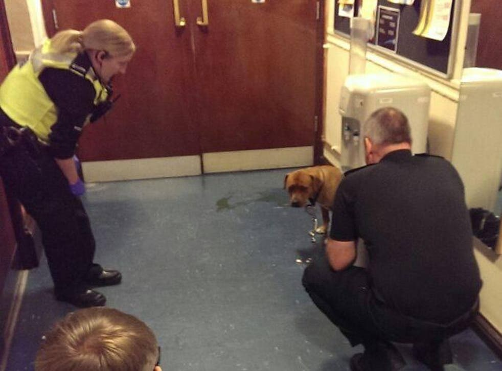 Officers looked after the dog while it pined for its owner