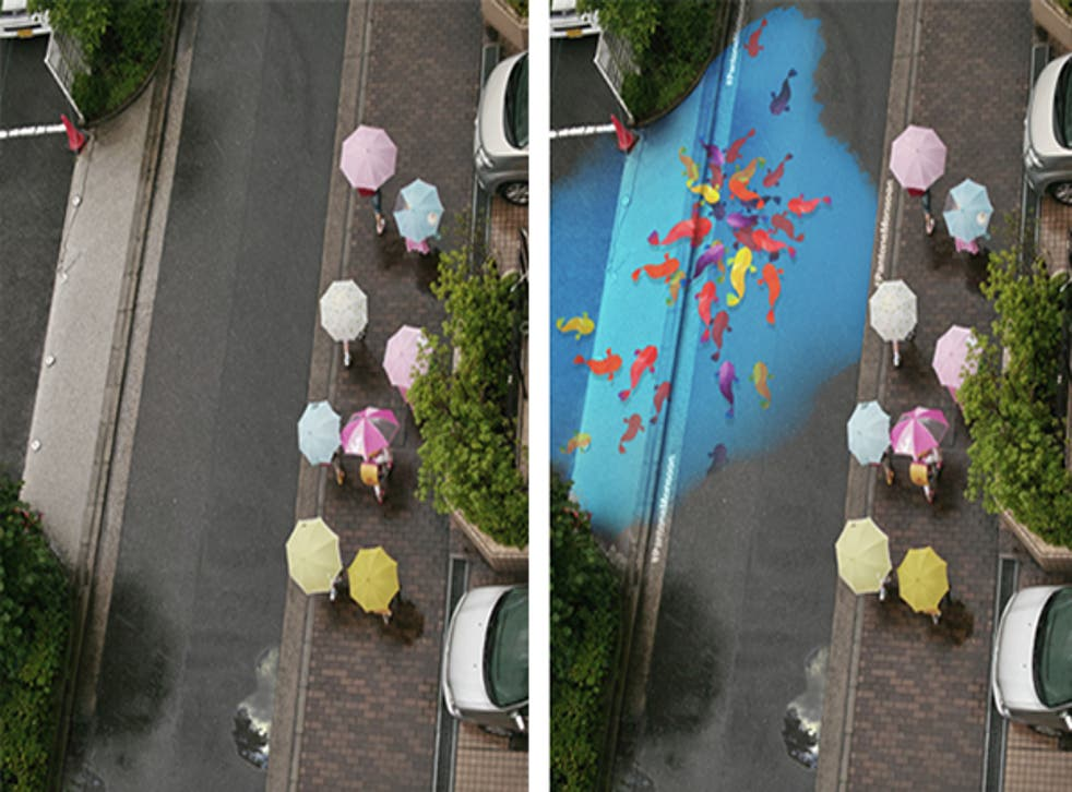 Painted fish gather in a puddle during Seoul's monsoon season