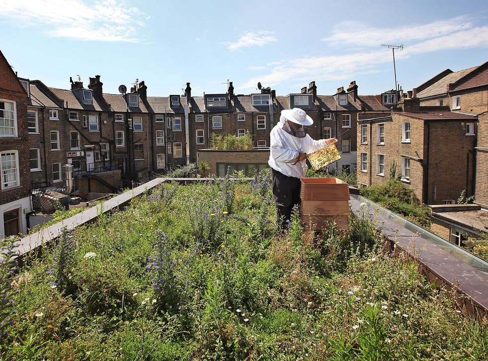 Researchers found that bee colonies closer to urban centres had higher levels of disease than those in rural areas
